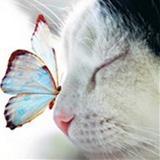 madds97 avatar