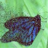 Blue Coral  avatar