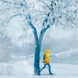 SeasonsoftheYear avatar