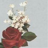 Kiki207 avatar