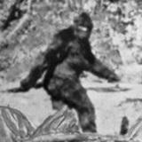 Sasquatchion  avatar